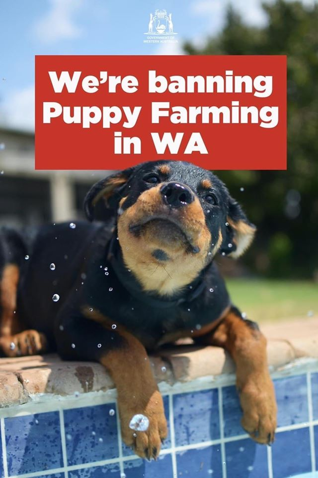 WA Opposition rejects Stop Puppy Farming legislation